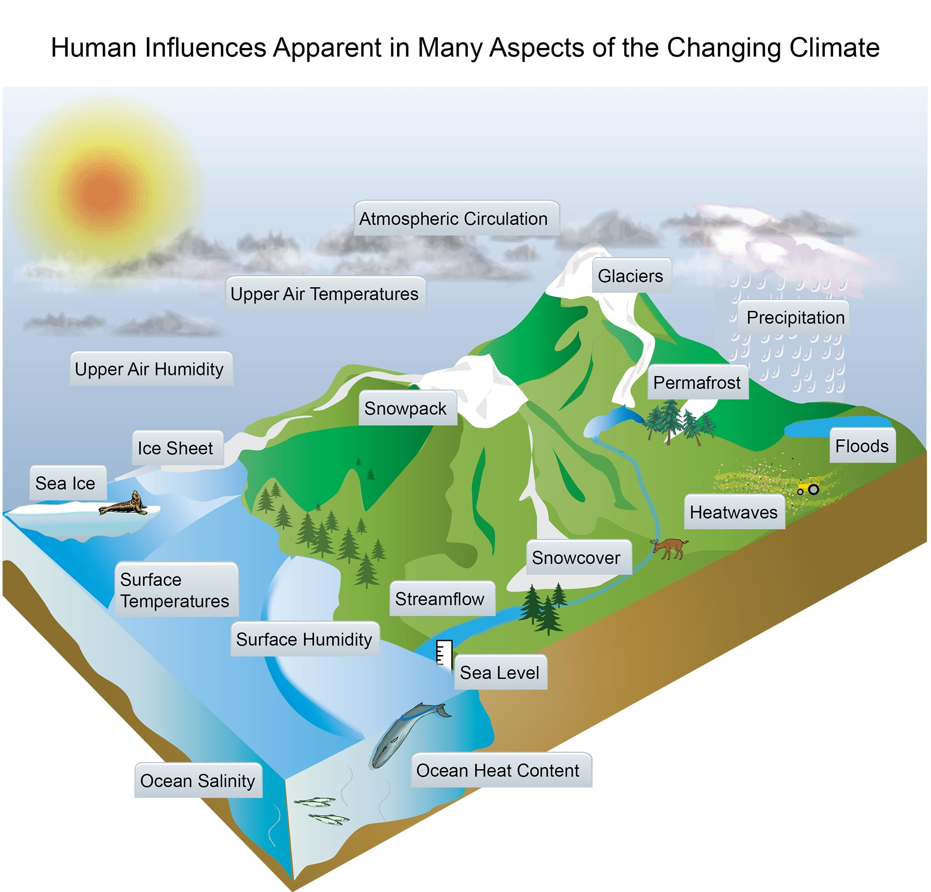how humans have contributed to climate Changes in solar irradiance have contributed to climate trends over the past century but since the industrial revolution, the effect of additions of greenhouse gases to the atmosphere has been over 50 times that of changes in the sun's output.