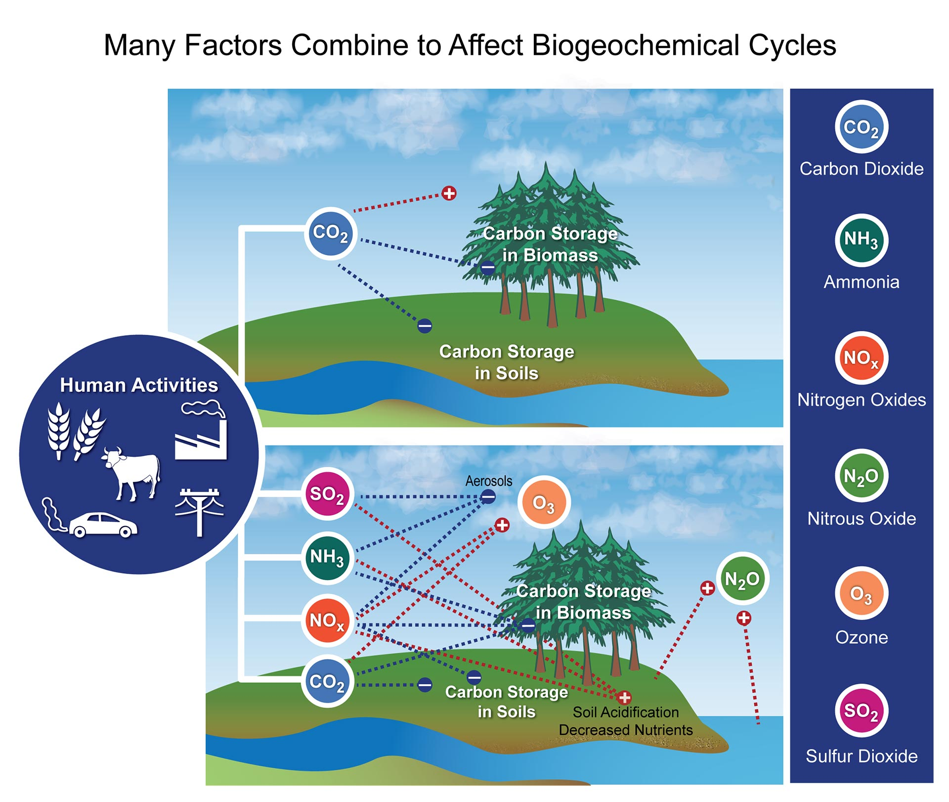 describe the relationship between anthropogenic carbon dioxide emissions and climate change