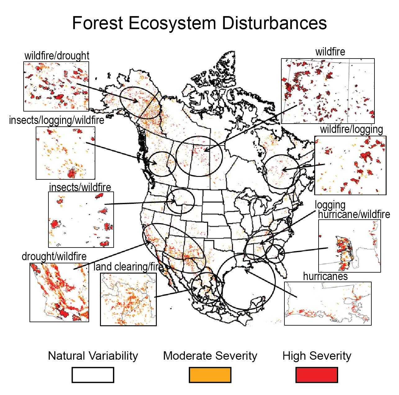Forests National Climate Assessment - Map of us forest types