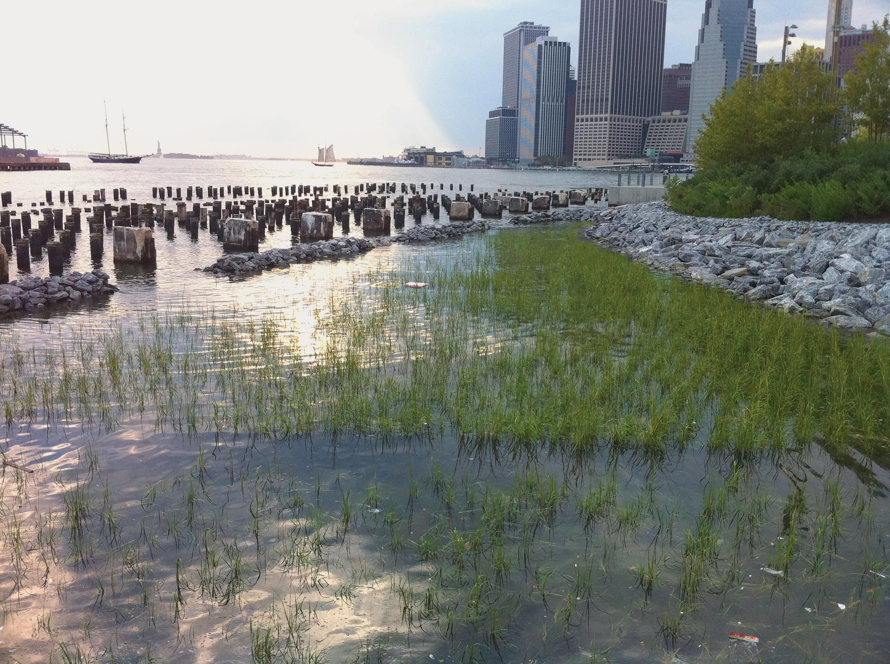coastal ecosystem restoration project