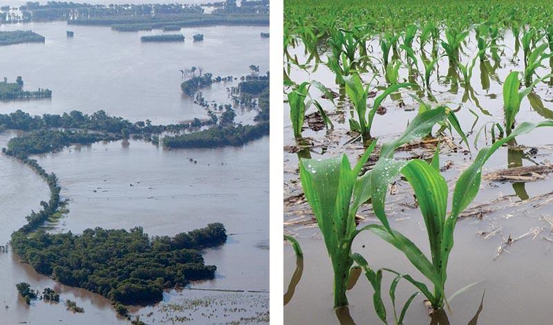 river flood waters; flooded corn field