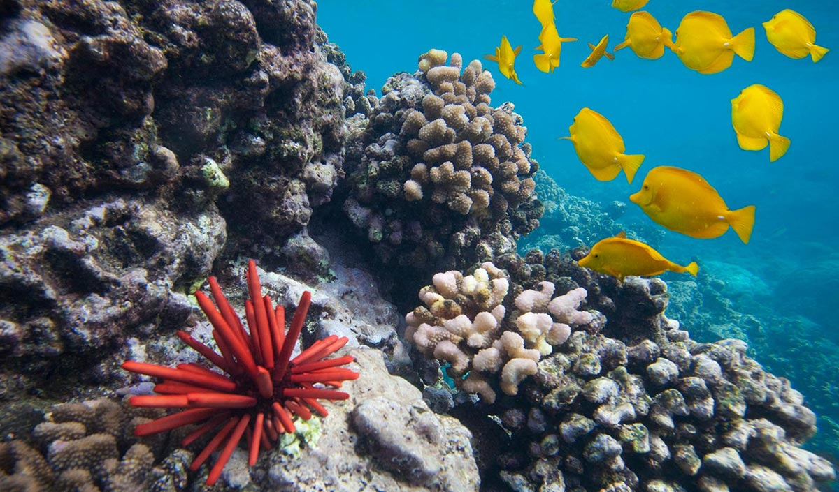 marine ecosystems coral reefs essay Reef limestone consists largely of a framework of skeletons from marine animals called corals reefs ecosystem indeed, coral reefs essays the coral.