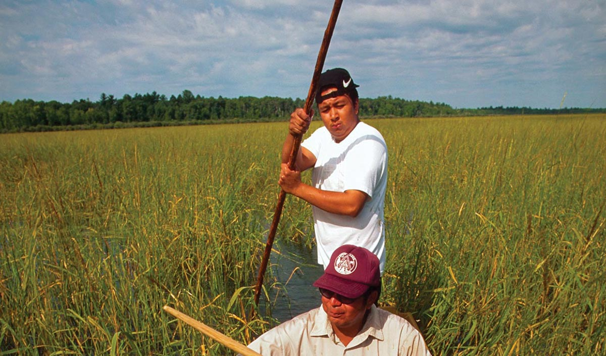 men harvesting in canoe